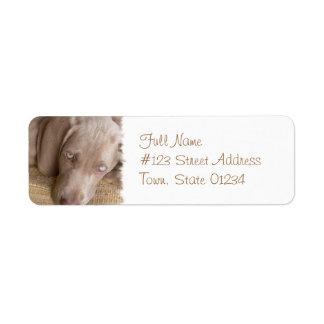 Etiqueta de correo del perro el dormir Weimeraner Etiquetas De Remite