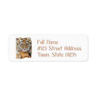 Etiqueta de correo del remite de Cub de tigre Etiqueta De Remitente