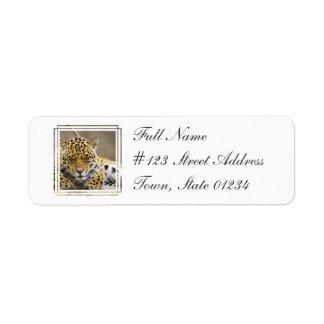Etiqueta de correo del remite de Cub del leopardo Etiquetas De Remite