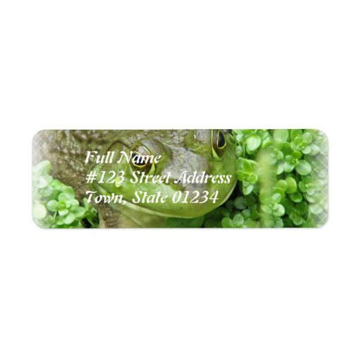 Etiqueta de correo del remite de la rana verde etiqueta de remitente