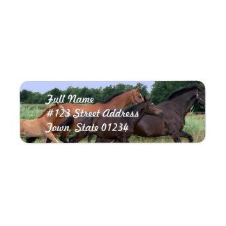 Etiqueta de correo del remite del caballo salvaje etiquetas de remite