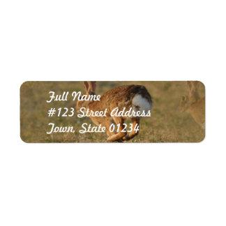 Etiqueta de correo del remite del conejo que salta etiquetas de remite