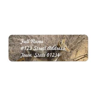 Etiqueta de correo del remite del diseño del etiquetas de remite
