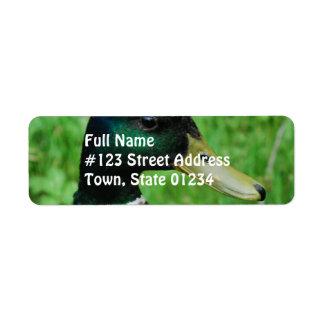 Etiqueta de correo del remite del pato silvestre etiquetas de remite