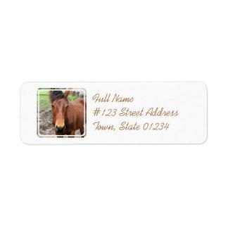 Etiqueta de correo excelente del caballo de la cas etiquetas de remite