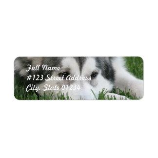 Etiqueta de correo fornida del perro el dormir etiquetas de remite