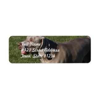 Etiqueta de correo juguetona del perro de etiquetas de remite