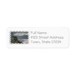 Etiqueta de correo linda del Chipmunk Etiquetas De Remite