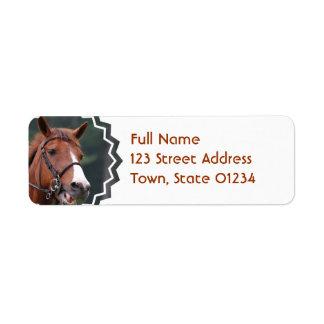 Etiqueta de correo linda del remite del caballo de etiquetas de remite