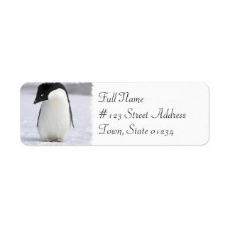 Etiqueta de correo sola del remite del pingüino etiqueta de remite