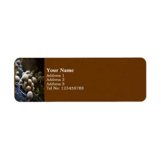 Etiqueta de devolución del remiendo del Toadstool  Etiquetas De Remite