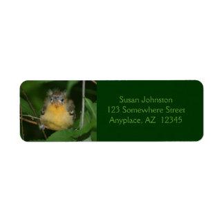Etiqueta de dirección animal del pájaro de Oriole
