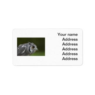 Etiqueta de dirección - búho del gris del bebé