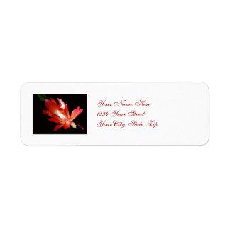 Etiqueta de dirección del cactus de navidad
