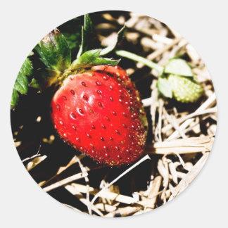 Etiqueta de enlatado de la mermelada de fresa