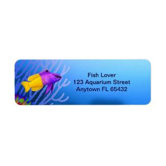 Etiqueta de hadas de los pescados de Basslet del Etiqueta De Remitente