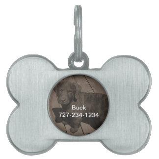 Etiqueta de la identificación del perro con su placa de nombre de mascota
