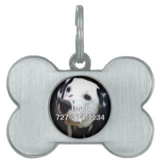 Etiqueta de la identificación del perro con su placas mascota