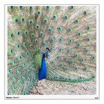 Etiqueta de la pared del pájaro del pavo real