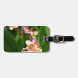 Etiqueta del equipaje del Orchidaceae Etiquetas Maleta