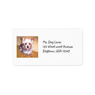 Etiqueta del mascota etiqueta de dirección