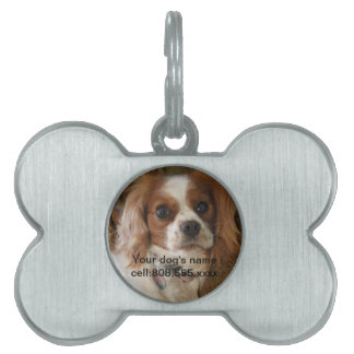 Etiqueta del mascota de la foto del perro del cont placa de nombre de mascota