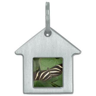 Etiqueta del mascota de la mariposa de Longwing de Placa De Nombre De Mascota