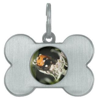 Etiqueta del mascota de la mariquita del punto de  placa de nombre de mascota