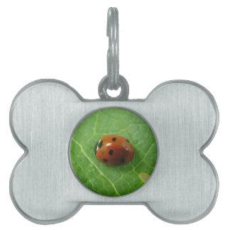 Etiqueta del mascota de la mariquita placas de mascota