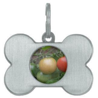 Etiqueta del mascota de los tomates del semáforo placas de mascota