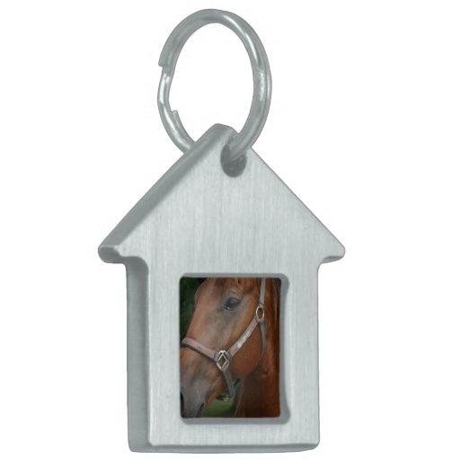 Etiqueta del mascota del caballo de la castaña dul placas mascota