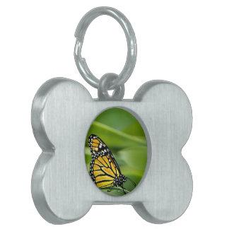 Etiqueta del mascota del diseño de la mariposa de  placas de nombre de mascota