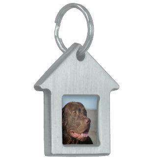 Etiqueta del mascota del labrador retriever placa mascota