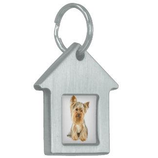 Etiqueta del mascota del perrito de Yorkie Placas De Mascota