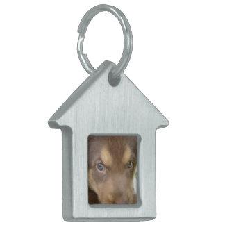 Etiqueta del mascota del perrito del laboratorio d placa de nombre de mascota