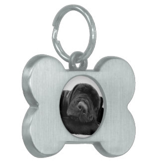 Etiqueta del mascota del perrito del laboratorio e placa de mascota