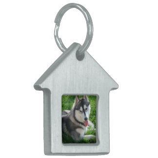 Etiqueta del mascota del perro del husky siberiano placas de mascota