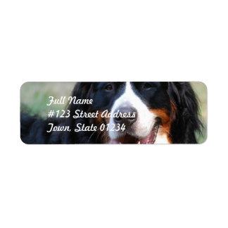 Etiqueta del perro de montaña de Bernese Etiqueta De Remitente