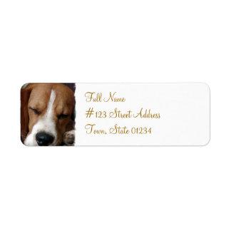 Etiqueta del remite del beagle el dormir etiquetas de remite