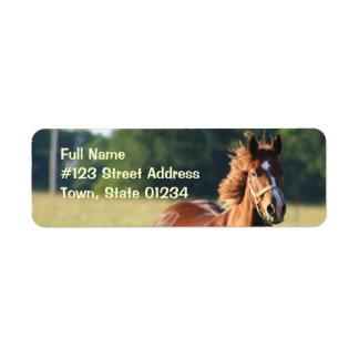 Etiqueta del remite del caballo de la castaña etiquetas de remite