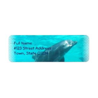 Etiqueta del remite del delfín de la natación etiqueta de remite