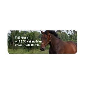 Etiqueta del remite del diseño del caballo de etiqueta de remite
