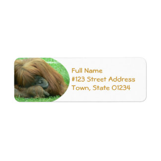 Etiqueta del remite del orangután etiquetas de remite