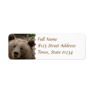 Etiqueta del remite del oso de Brown Etiqueta De Remitente