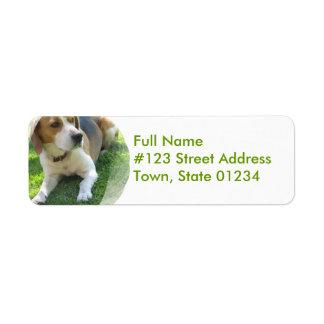 Etiqueta del remite del perro de caza del beagle etiqueta de remite