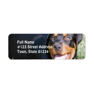 Etiqueta del remite del perro de Rottweiler Etiqueta De Remitente