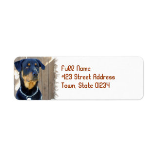 Etiqueta del remite del perro de Rottweiler Etiquetas De Remite