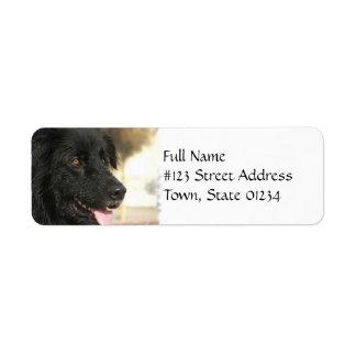 Etiqueta del remite del perro de Terranova Etiquetas De Remite