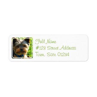 Etiqueta del remite del perro de Yorkshire Terrier Etiqueta De Remitente