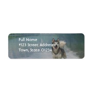 Etiqueta del remite del perro del Malamute de Etiqueta De Remitente